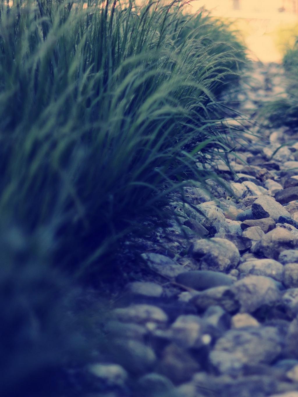 草自然道路移动壁纸