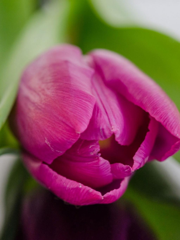 自然紫色花园花手机壁纸