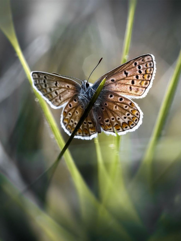 草植物蝴蝶移动壁纸