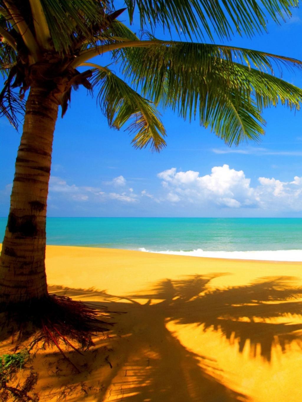 树海滩边移动壁纸