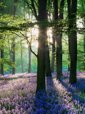 紫罗兰色森林花田移动壁纸