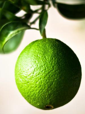 绿色橙色移动壁纸