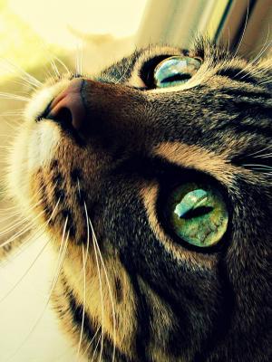 猫眼手机壁纸