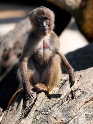 动物猴子手机壁纸