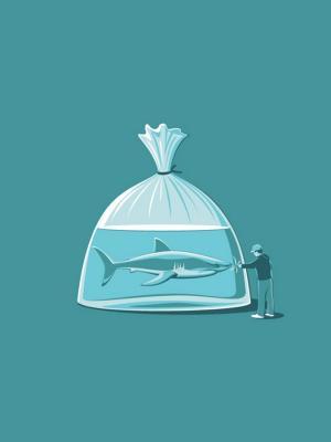 愚蠢的鲨鱼手机壁纸
