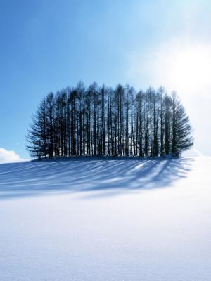 冬季风景移动壁纸