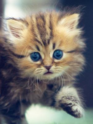 可爱有趣的小猫手机壁纸