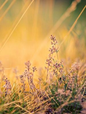 自然花粉色手机壁纸