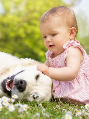 婴儿狗草移动壁纸
