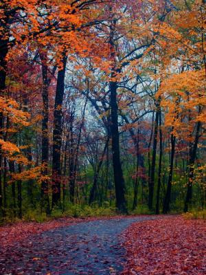 森林叶子手机壁纸