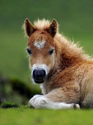 动物小马移动壁纸