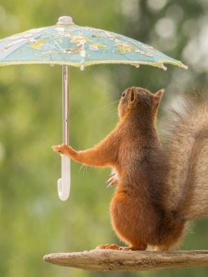 松鼠伞构成分支移动壁纸