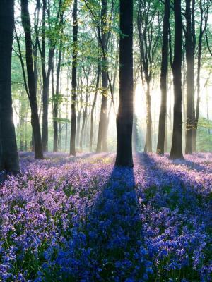黎明在森林手机壁纸