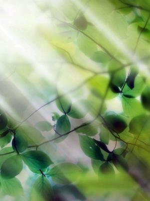 叶自然阳光移动壁纸