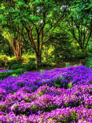 紫色花园手机壁纸