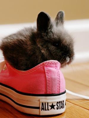 兔子鞋移动壁纸