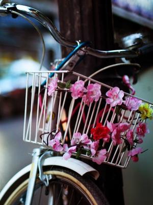 花自行车手机壁纸