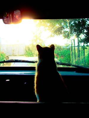 日落太阳猫手机壁纸