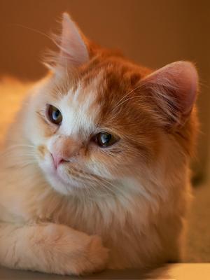 猫和笔记本移动壁纸