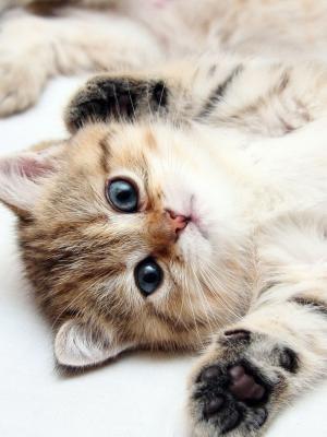 可爱的小猫手机壁纸