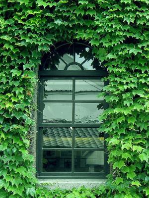 绿色手机壁纸的家