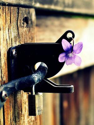 花紫色篱笆移动壁纸