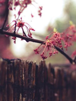 自然围栏花朵手机壁纸