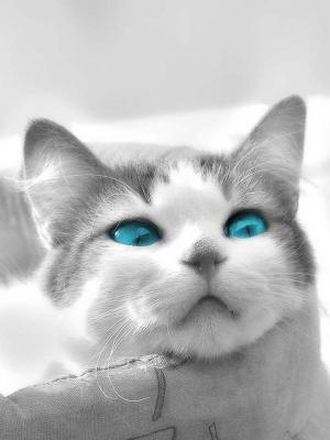 蓝眼睛手机壁纸