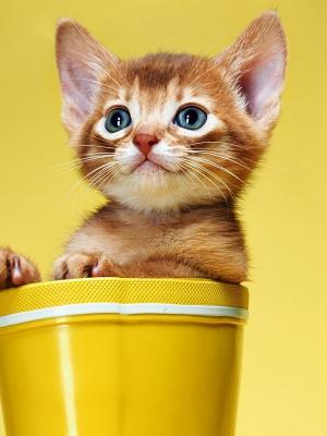 微笑猫手机壁纸