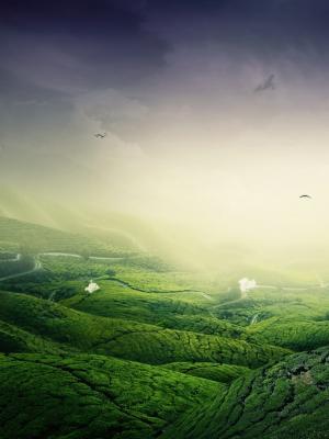 绿色景观手机壁纸