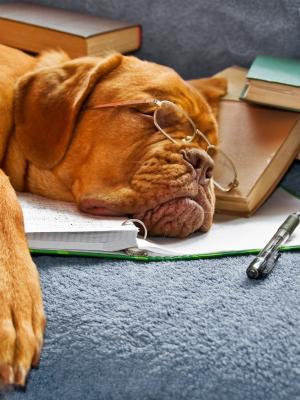 动物狗手机壁纸