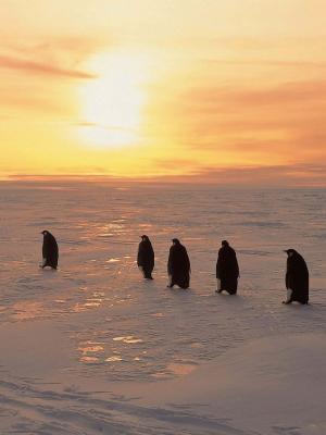 企鹅北移动壁纸
