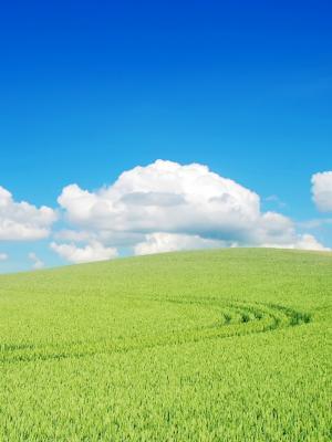 美丽的绿色景观手机壁纸