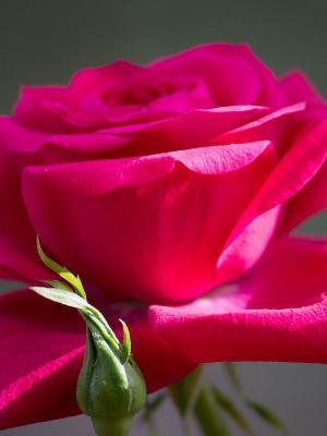花是开放的移动壁纸