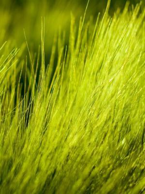 光谱草绿色手机壁纸
