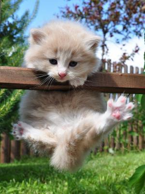 草小猫手机壁纸