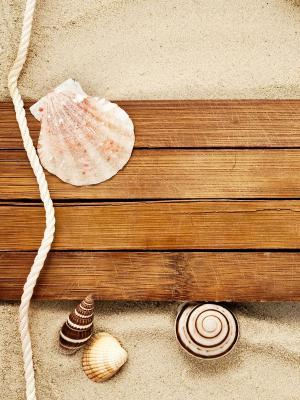 沙贝壳蜗牛海星海滩移动壁纸