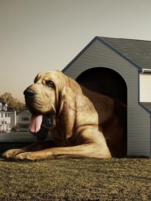 房子狗手机壁纸