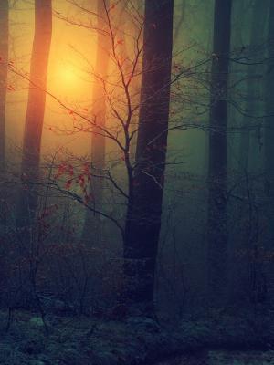 森林薄雾手机壁纸
