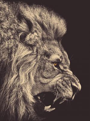 黑暗的狮子移动墙纸