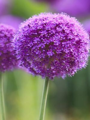 紫色交响乐手机壁纸