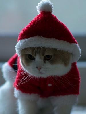 圣诞老人猫手机壁纸