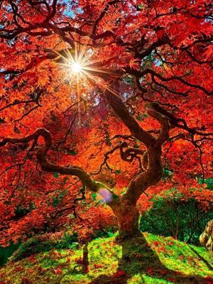 秋天天堂手机壁纸