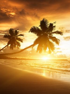 海滩热带移动壁纸