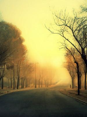 树路移动壁纸