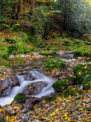 秋季森林手机壁纸