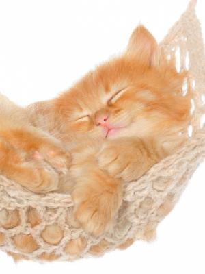 睡觉的小猫手机壁纸