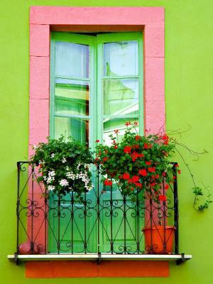 绿墙窗口手机壁纸