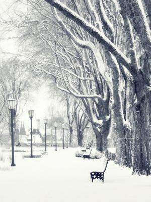 雪树手机壁纸