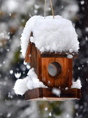 冬季雪公园森林手机壁纸